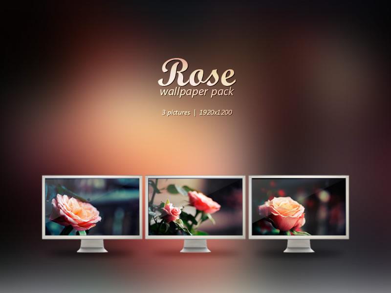 5 packs de fondos de Primavera para tu computadora, celular o tablet - fondos-primavera-rose-wallpaper