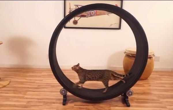 5 extraños proyectos de Kickstarter que fueron financiados en 2014 - One-Fast-Cat-Kickstarter