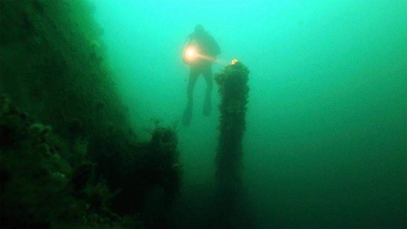 Descubren gigantesco bosque subacuático de la edad del hielo - bosque-subacuatico