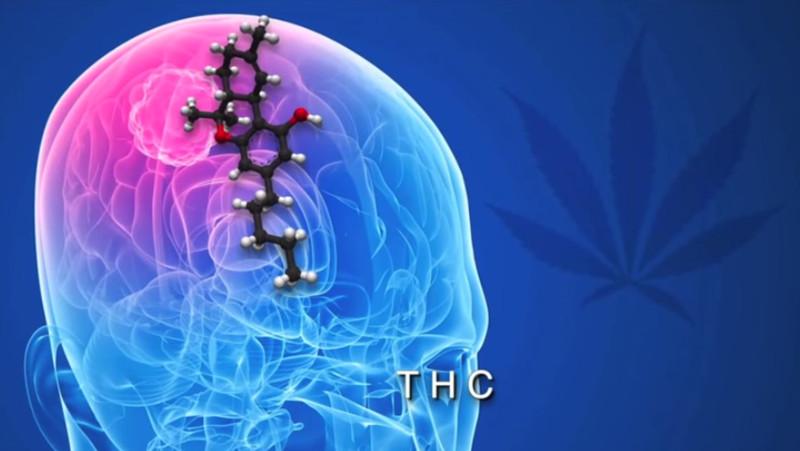 La planta de la marihuana pudiera ser un auxiliar contra el cáncer - marihuana-contra-cancer