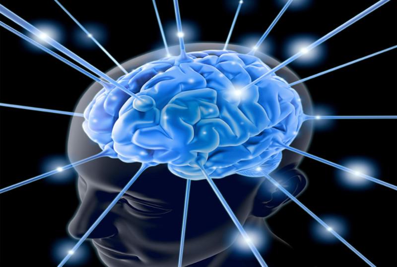 Afirman que el cerebro puede seguir fabricando neuronas durante toda la vida - produccion-de-neuronas