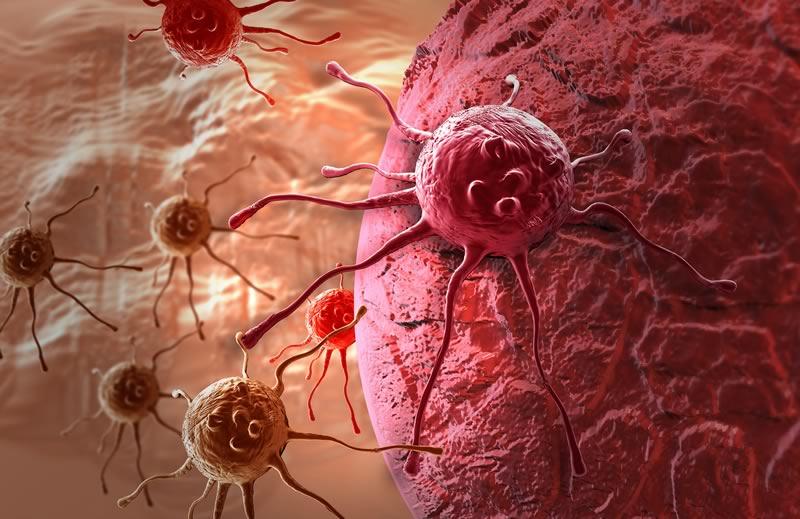 Mexicanos identifican hormona con propiedades anticancerígenas - hormona-con-propiedades-anticancerigenas