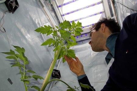 ¿Cómo se comportarían las plantas en la Luna y Marte? Un mexicano trabaja en averiguarlo