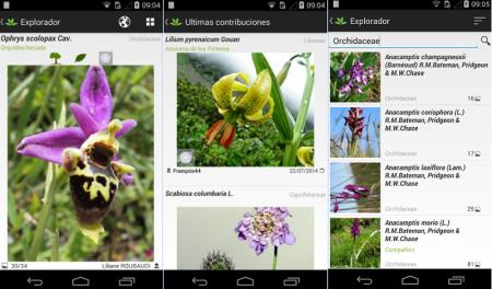 """Crean un """"Shazam"""" para identificar todo tipo de plantas"""