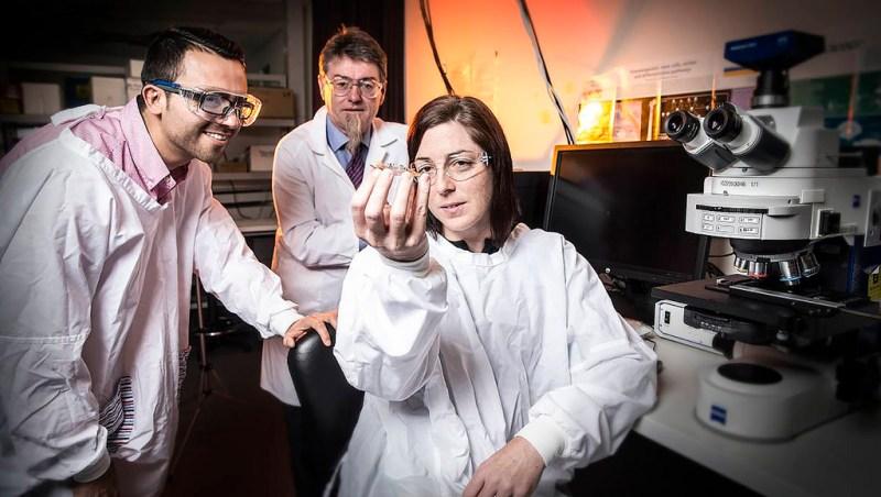 Mexicano en Australia logra cultivar neuronas en mini cerebro impreso en 3D - cultivar-neuronas-en-mini-cerebro-impreso-en-3d-800x452