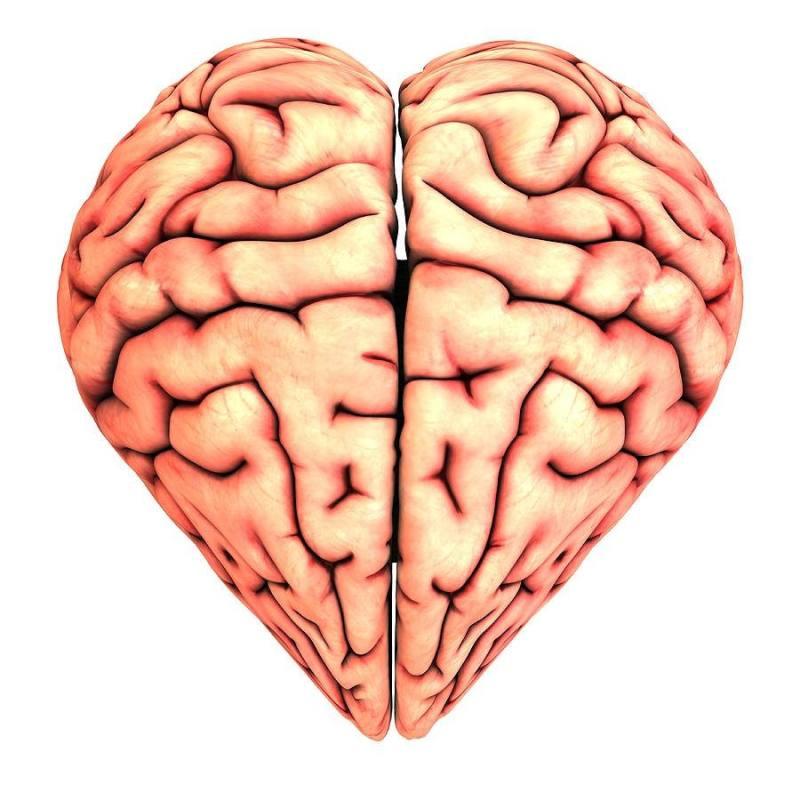 Descubren que bioquímicamente, el amor entra por la nariz - bioquimicamente-el-amor-entra-por-la-nariz_2-800x792