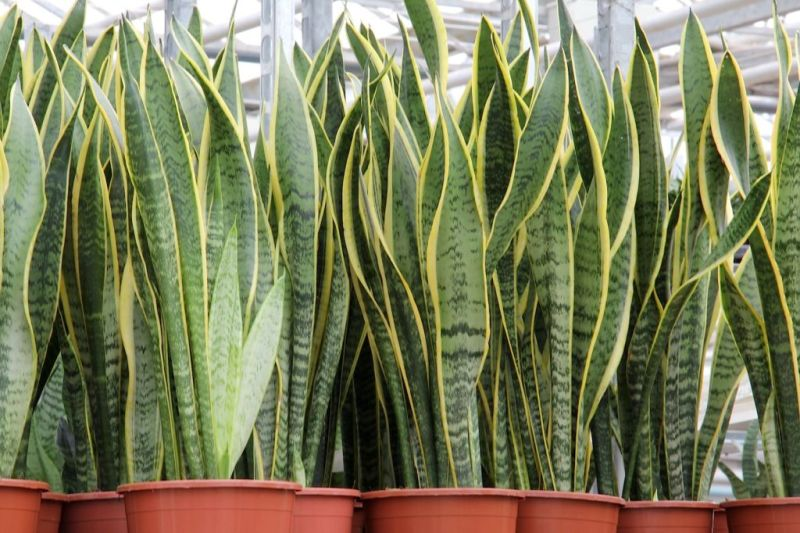 ¿Cansado del calor? 5 plantas que absorben el calor y purifican el aire de tu casa