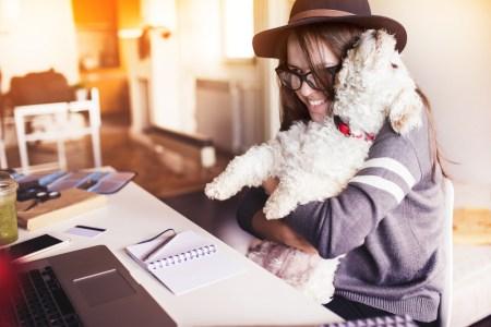Las 10 colonias más pet-friendly de la CDMX