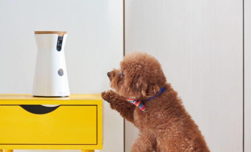 Furbo, la cámara interactiva para perros ¡Llega a México! - furbo_1-800x484