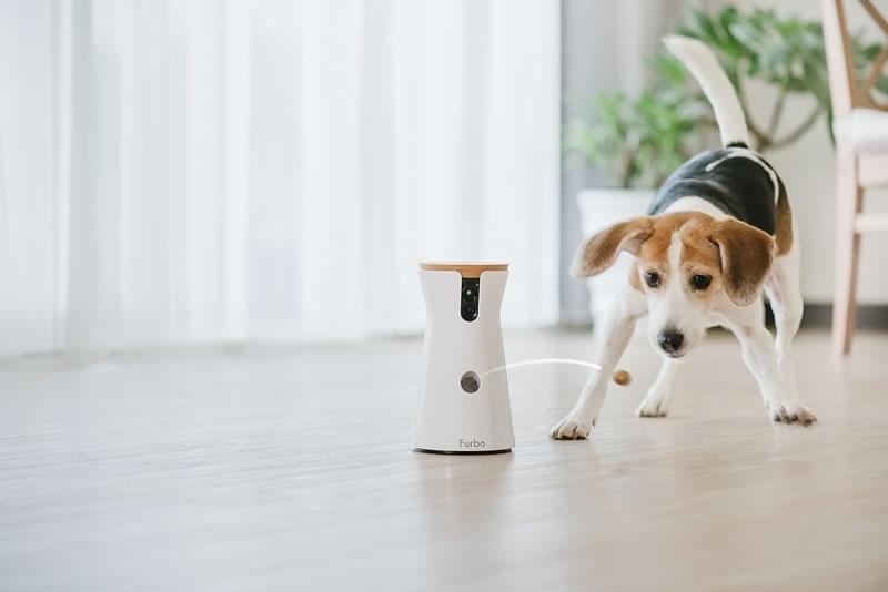 Furbo, la cámara para vigilar a tu perro baja de precio ¡Aprovecha! - furbo-camara-para-perros-mexico-800x534
