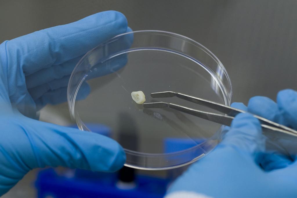 Innovan científicos de la UNAM aislamiento de células madre - aislamiento-de-celulas-madre