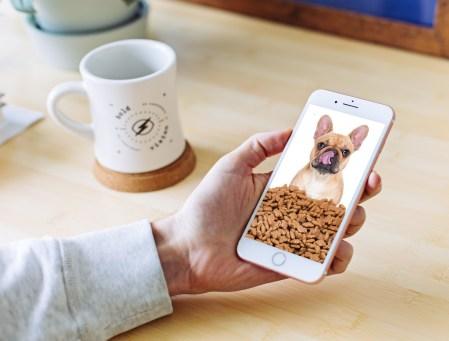 Niñas mexicanas crean app para alimentar perros a distancia
