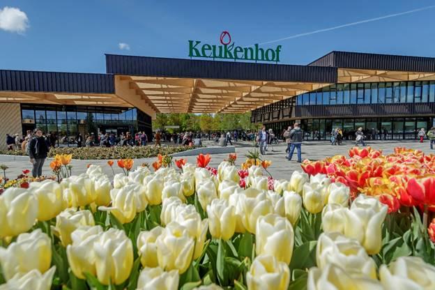 Booking.com te invita a que te hospedes en un campo de tulipanes - campos-de-tulipanes-de-keukenhof