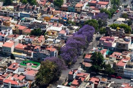 Los distintos sitios para capturar las mejores fotos de jacarandas en CDMX