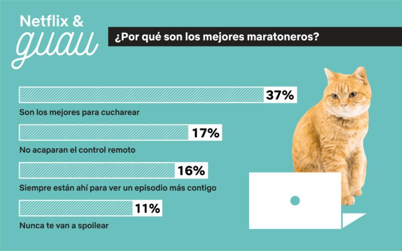 NETFLIX & GUAU: Maratonear es mejor con perros (y gatos) - netflix-guau_3-800x500