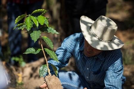 "El programa ""Todos Sembramos Café"" de Starbucks llega a Oaxaca"