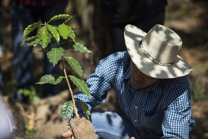 "El programa ""Todos Sembramos Café"" de Starbucks llega a Oaxaca - caficultores"