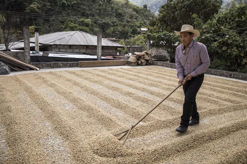 """El programa """"Todos Sembramos Café"""" de Starbucks llega a Oaxaca - tsc-oaxaca-800x533"""