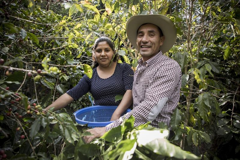 """El programa """"Todos Sembramos Café"""" de Starbucks llega a Oaxaca - tsc"""