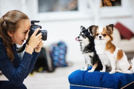 5 prácticos y útiles recomendaciones para fotografiar a tus mascotas en casa