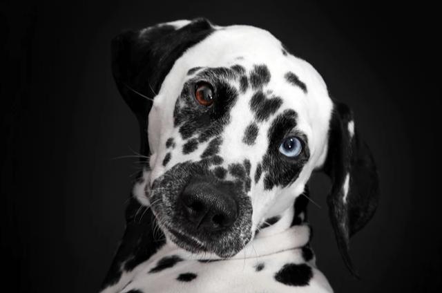 ¿Cómo un perro tiene más seguidores que tú en Instagram? - webadictos_curso_fotografia_profesional_de_perros_1