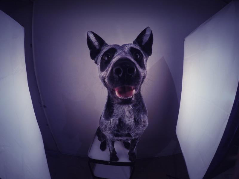 ¡Luces, cámara y horror! Crea tu propio cortometraje de Halloween desde casa - halloween-800x600