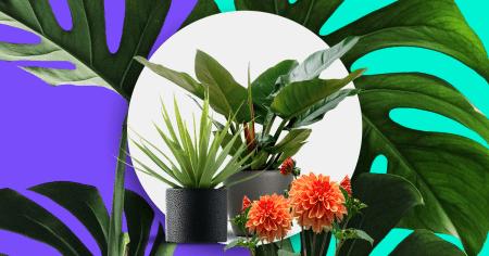 Guía para elegir las plantas ideales para tu espacio sin el riesgo de que mueran