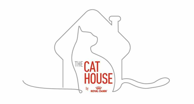 Royal Canin lanza The Cat House, experiencia virtual para conocer el mundo de los gatos - the-cat-house-royal-canin-800x428