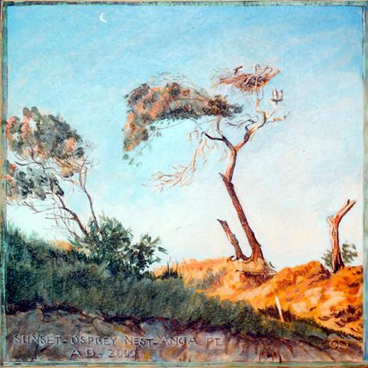 Sunset - Osprey Nest - Angourie Point