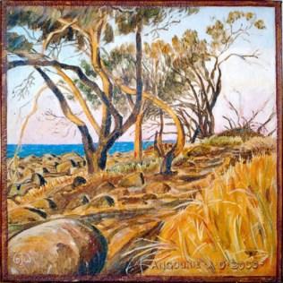 Coastal she-oaks - Angourie Point