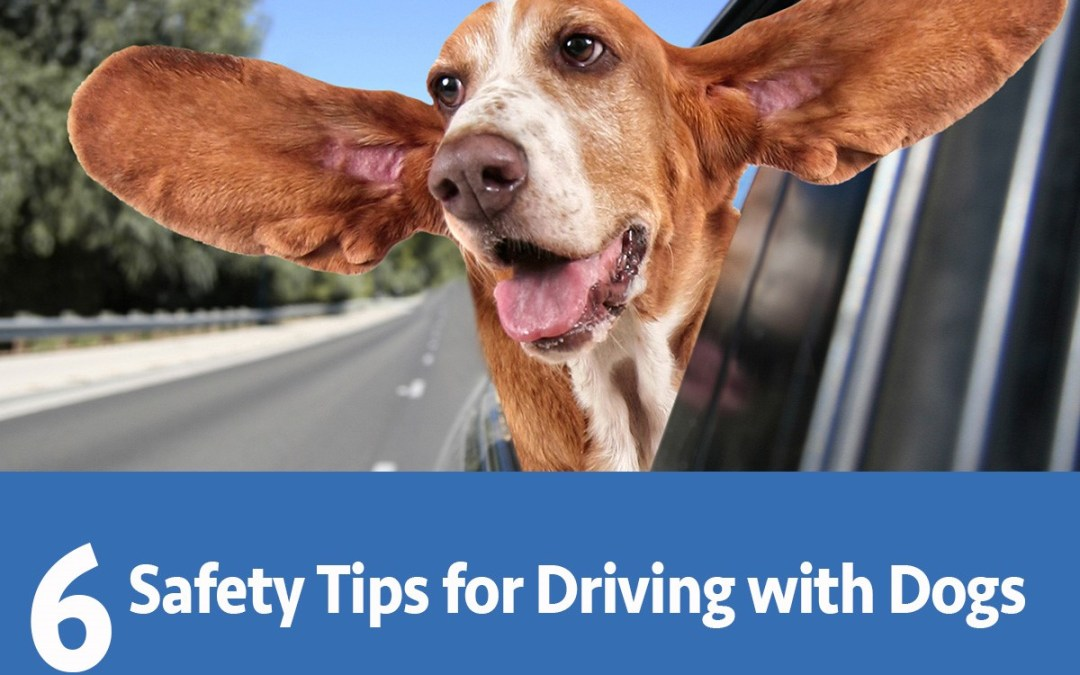 6 Safety Tips for Driving with Dogs!