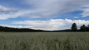 Meadows at Whiteman Vega