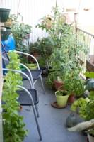 Overzicht van een moestuin welke gekweekt wordt op een balkon