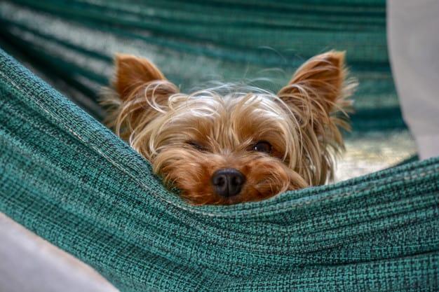Yorkshire Terrier colocando a cabeça pra fora da rede