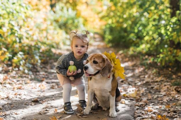 Beagle sentado e uma menina em pé