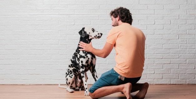 Maneiras de gastar energia de cães agitados