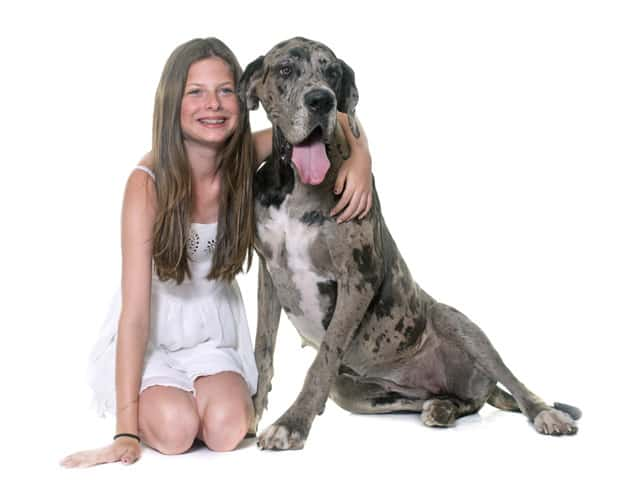Menina abraçando o Dogue Alemão em fundo branco