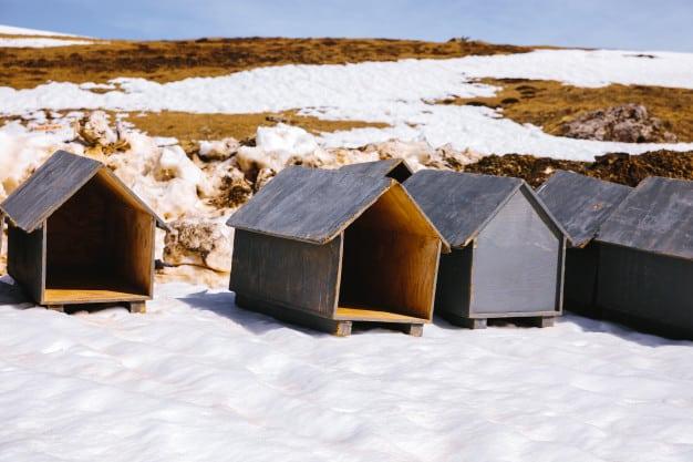 Como Construir uma Casa de Cachorro Ideal
