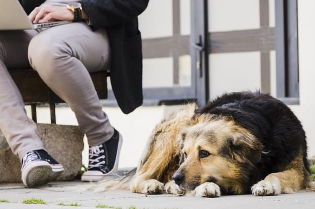 Cachorro deitado na rua