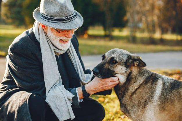 Cães para pessoas idosas