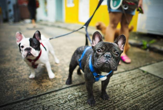 Dois cachorros de colheiras