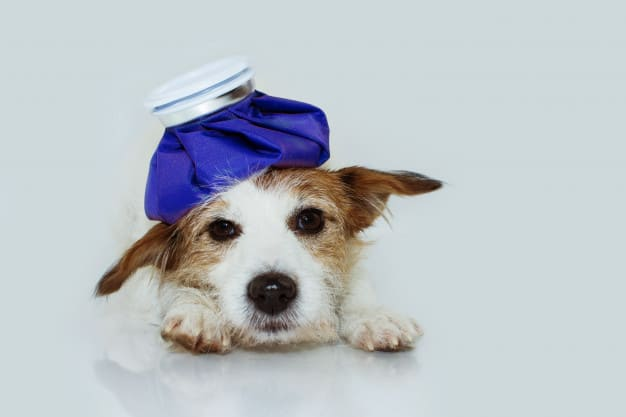 Dermatite Canina: Sintomas e Tratamentos