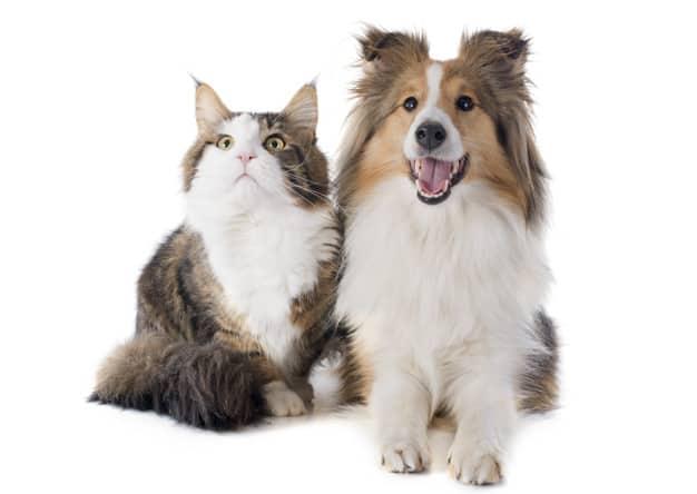 Cães e gatos são mesmo inimigos?