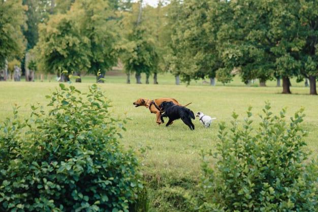 Saiba como diferenciar e lidar com cães submissos e dominantes
