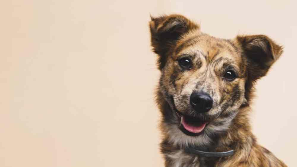 Cachorro feliz olhando para frente esperando pelos nomes