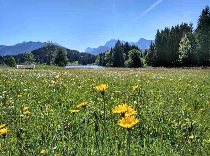 Wiesenblumen am Geroldsee