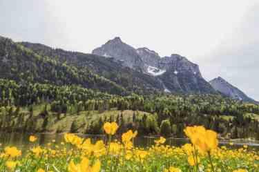 Blumenmeer am Ferchensee