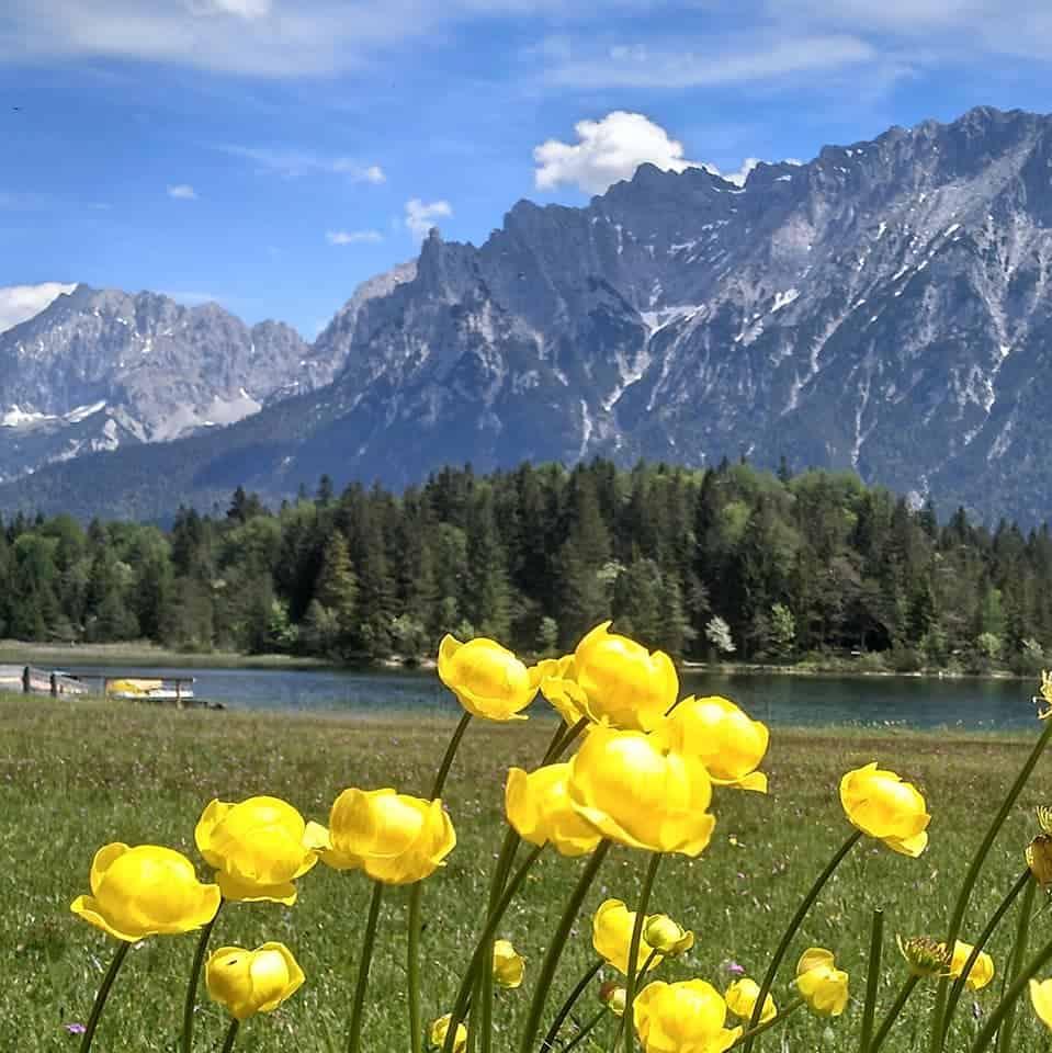 Trollblumen, Lautersee und Karwendel