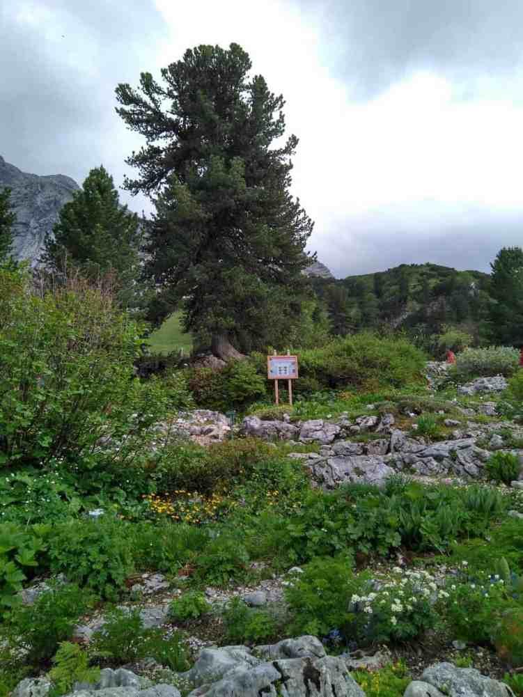 Alpengarten am Schachen