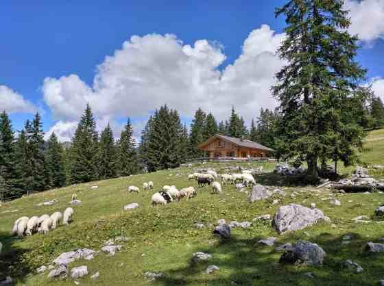 Schafe vor der Rehbergalm